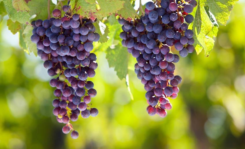 Vineyard 1031 Exchange